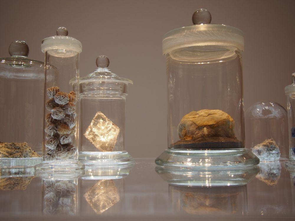 自然と美術の標本展