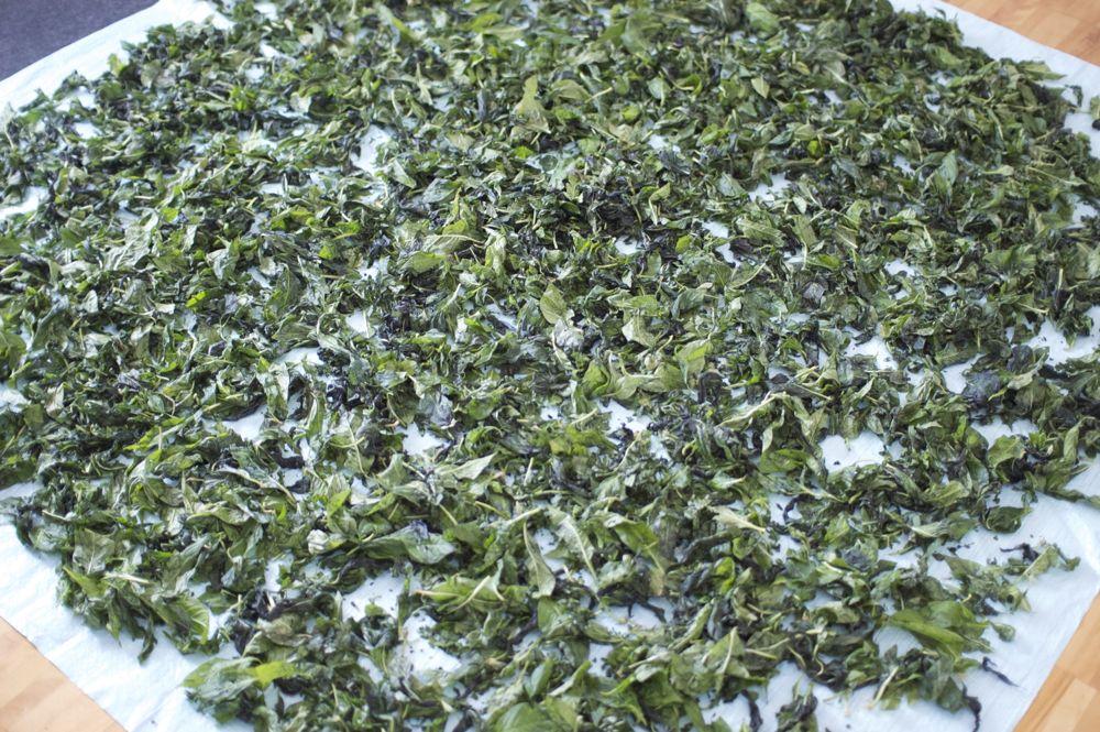 藍の葉を干す
