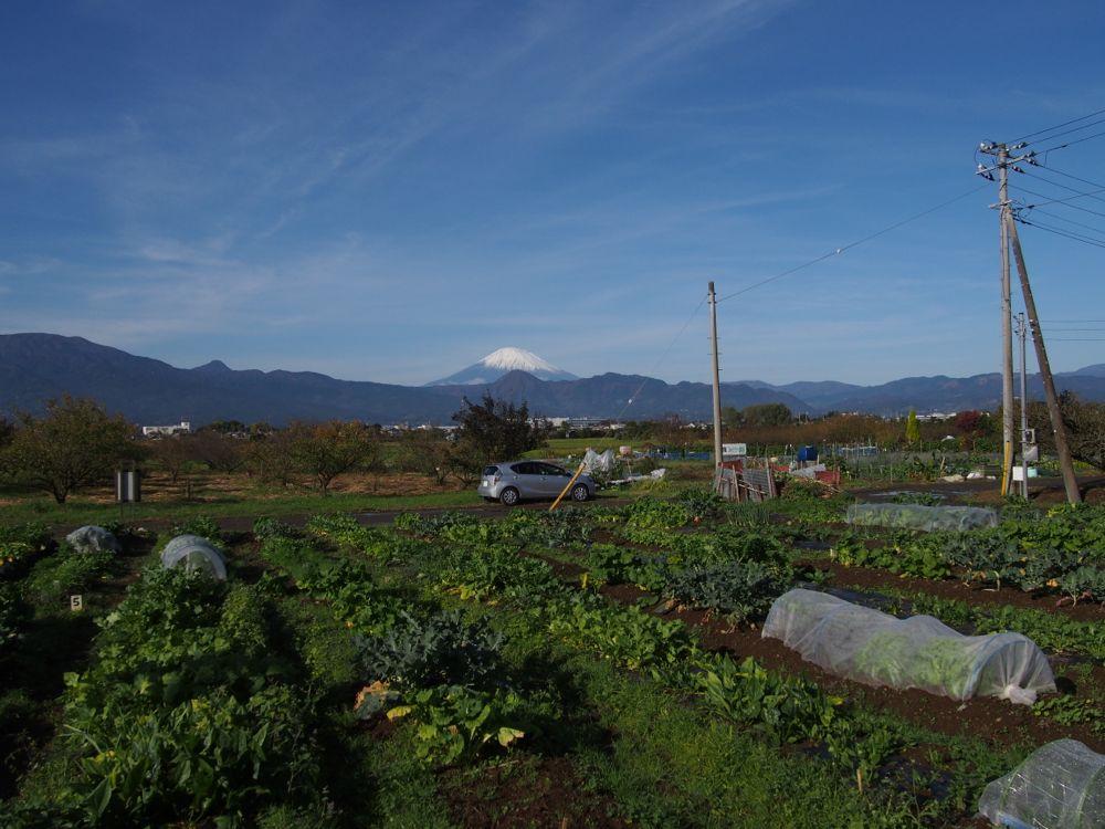 無農薬栽培野菜