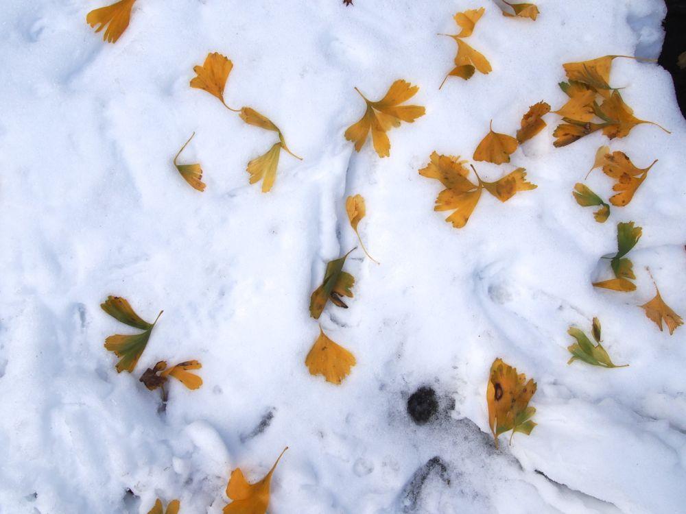 仙石原紅葉