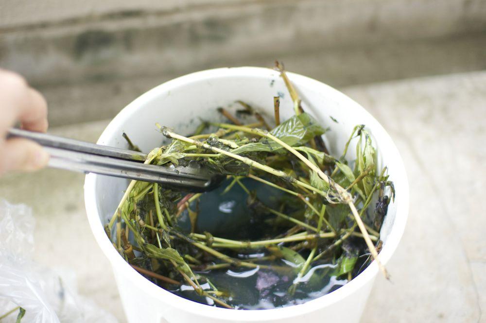 藍の生葉の発酵煮染法
