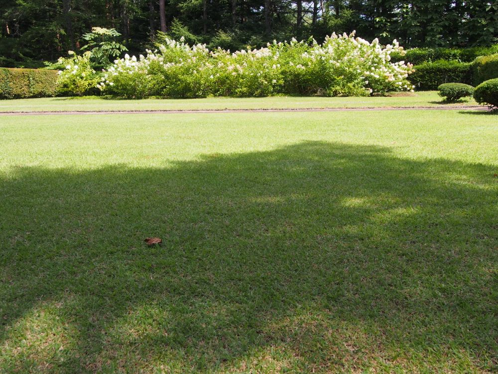 富士吉田 恩賜林庭園