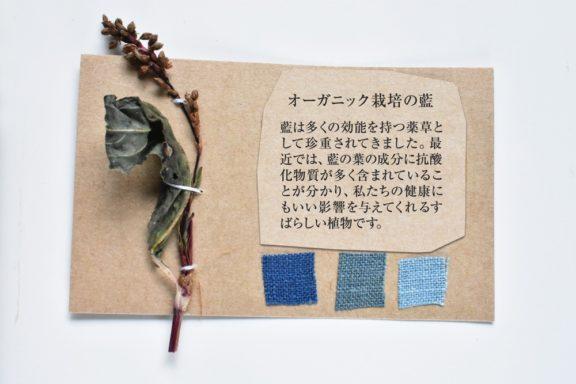 植物カード:藍