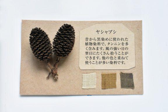 植物カード:ヤシャブシ